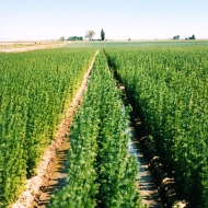 Plants Growing in the Field
