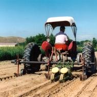 Direct Field Planting