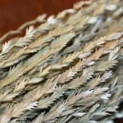 Dried Arrow Grass