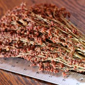 Dried Broom Corn Red for Sale