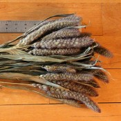 German Millet for Sale
