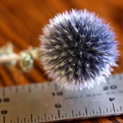 Dried Echinops from LoveJoy Farms