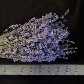 Premium Lavender from LoveJoy Farms, Dried Flowers Bulk, Drid Lavendar Bulk