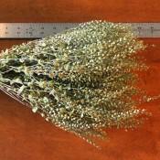 Dried Lepidium Pepper Grass for Sale