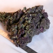Dried Purple Blossom Oregano for Sale