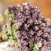 Purple Blossom Oregano Dried