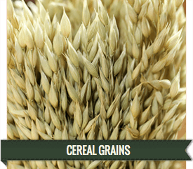LoveJoy Farms Cereal Grains for Sale