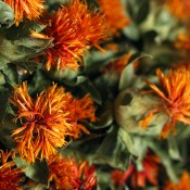 Dried Orange Safflower for Sale