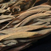 Dried Green Sage