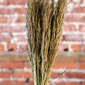 Dried Sudan Grass for Sale