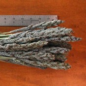 Dried Tapestry Millet for Sale