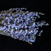Dried Blue Larkspur for Sale