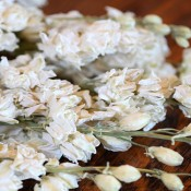 Dried White Larkspur